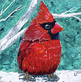 Pudgy Cardinal by T Fry-Green