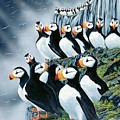Puffin College by Bob Patterson