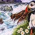 Puffin Peace by Donald Dean
