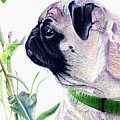 Pug And Nature by Patricia Barmatz