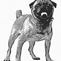Pug Dog Standing Graphic by Edward Fielding