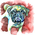 Pug In Red by Christy  Freeman