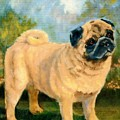 Pug In The Park by Jimmie Trotter