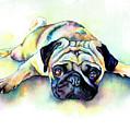 Pug Laying Flat by Christy Freeman Stark