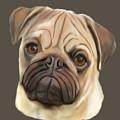 Pug Puppy  by Karen Harding