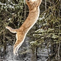 Puma High Jump by Wes and Dotty Weber
