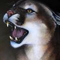 Puma II by Jon Quinn
