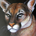 Puma by Jon Quinn