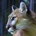 Puma by Robert Pearson