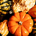 Pumkin And Gourds by Steven Sparks
