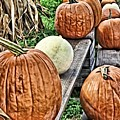 Pumkins In A Row by Mary Pille