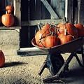 Pumpkin Family by Amanda Wimsatt