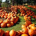 Pumpkin - Happy Thanksgiving by Debbie Oppermann