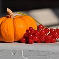 Pumpkin N Berries by Barbara Treaster
