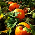 Pumpkin Patch by Angela Rath