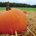 Pumpkin Patch by CartographyAssociates