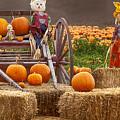 Pumpkin Patch by David Millenheft