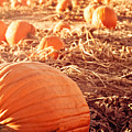 Pumpkin Patch by Debi Bishop