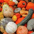 Pumpkin Patch by Paul Quinn