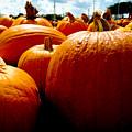 Pumpkin Patch Piles by Marisela Mungia