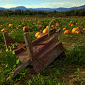 Pumpkin Patch. by Spirit Vision Photography