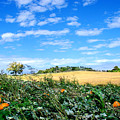 Pumpkin Patch by Steve Karol
