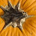 Pumpkin Point by Christi Kraft