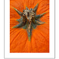 Pumpkin Stem Poster by Mike Nellums