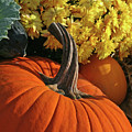 Pumpkin Still Life  by Sharon Mayhak