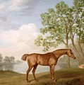Pumpkin With A Stable-lad by George Stubbs