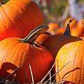 Pumpkins 2 by Sharon Talson
