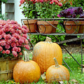Pumpkins And Flowers by Linda Drown