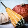 Pumpkins by Angela Doelling AD DESIGN Photo and PhotoArt