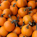 Pumpkins by Bradford Martin