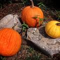 Pumpkins For October  by Buck Buchanan