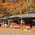 Pumpkins For Sale by Louise Heusinkveld