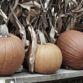 Pumpkins For Sale by Smilin Eyes  Treasures