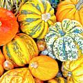 Pumpkins by Heiko Koehrer-Wagner