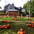 Pumpkins In Martha's Vineyard Farm by Rossano Ossi