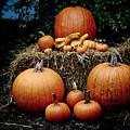 Pumpkins In The Dark by Jim DeLillo