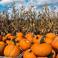 Pumpkins by Joye Ardyn Durham