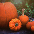 Pumpkins  by Saija Lehtonen