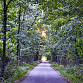 Pumpkinvine Trail In Fall by David Arment