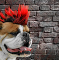 Punk Bully by Christine Till