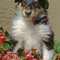 Pup In The Flowers by Robert Chaponot