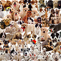 Puppies Montage by Warren Photographic