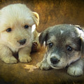 Puppies by Svetlana Sewell