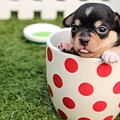 Puppy Cup by Siobhan May