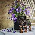 Puppy Dog With Flowers by Ronel Broderick