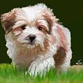 Puppy In High Grass by Jack Bunds
